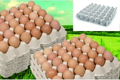 Vỉ đựng trứng bằng giấy